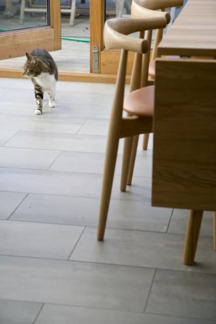 Env_CH20_OONl_Cat